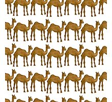 Cute camel Photographic Print