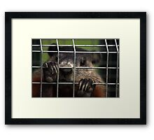 Relocated Groundhog. Framed Print