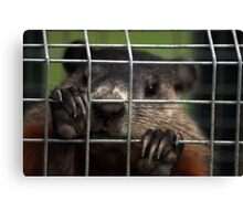Relocated Groundhog. Canvas Print
