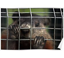 Relocated Groundhog. Poster