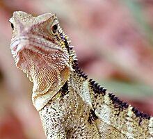 Lizardry by Ersu Yuceturk