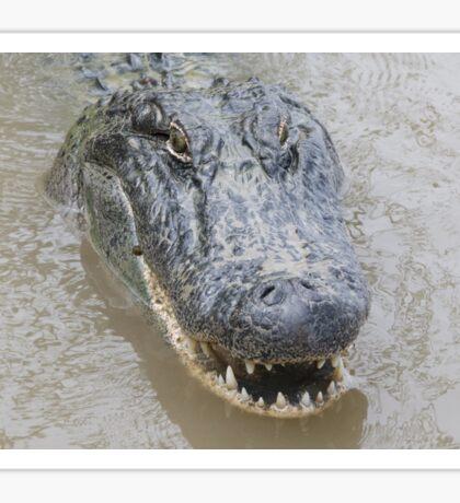 Alligator Sticker