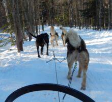 Winter Husky Sleigh Ride Sticker