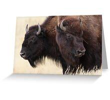 Bison Friendship Greeting Card