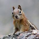Ground Squirrel on Stage by WorldDesign