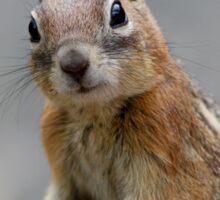 Ground Squirrel on Stage Sticker