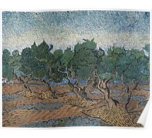 Vincent Van Gogh - Olive grove, November 1889 - December 1889 Poster