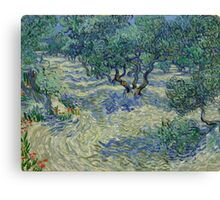 Vincent Van Gogh - Olive Orchard Canvas Print