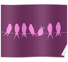 Songbird purple Poster