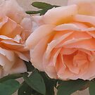 Orange Roses by Christine  Wilson