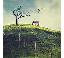Horse on a Colombian Hillside Photographic Print