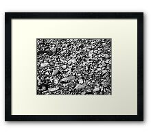 a natural history : monochrome Framed Print