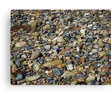 a natural history in colour Canvas Print