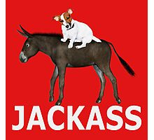 Donkey+Jack Russell=JackAss Photographic Print