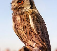 Tiny owl by NiDe