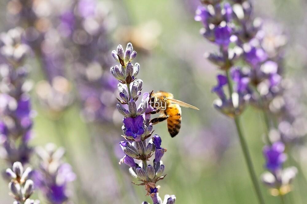Spring Bee Days by Josie Eldred