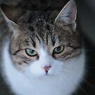 From the Cat's Point of View . Andrzej Goszcz. by © Andrzej Goszcz,M.D. Ph.D