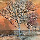 Winter's Dawn by Shawna Rowe