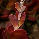 Red Succulent by Heather Friedman
