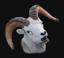 Ram Portrait by William C. Gladish