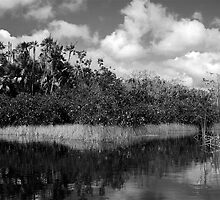 Everglades Palms by Bill Wetmore