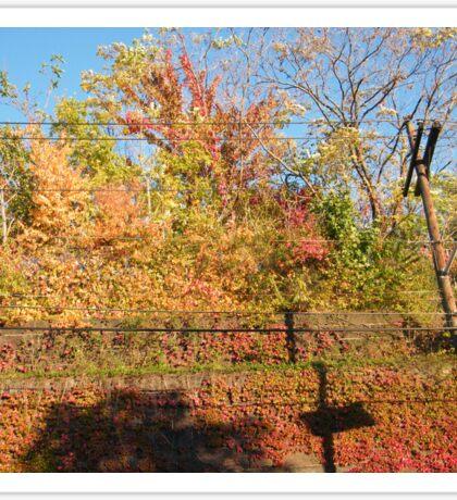 October Sixth Street Embankment Autumn Colors, Former Pennsylvania Railroad Embankment, Jersey City, New Jersey Sticker