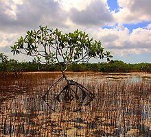 Marl Prairie by Bill Wetmore