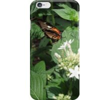 Hungry Butterfly iPhone Case/Skin