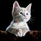 Kitten by blacknight