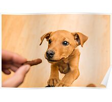 playful brown dog, indoors Poster