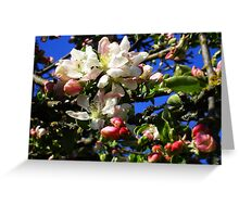 Flower Buds Greeting Card