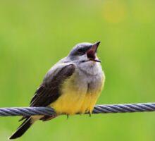Singing Kingbird Sticker