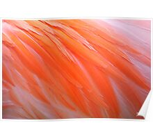 Flamingo Feathers Poster