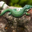 ABRONIA GRAMINEA by CRYROLFE