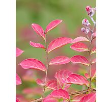 pink flower and leaves  in the garden Photographic Print