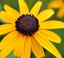 Happy Yellow Flower by Danielle Scott