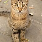 Cute Tabby Street Cat by taiche