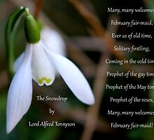 The Snowdrop by Lord Alfred Tennyson by AnnDixon