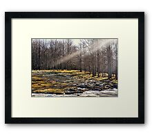 A ray of light in the forest Framed Print