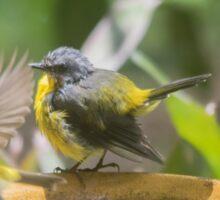 Bird Bath Time  Sticker
