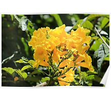 Bunch of Yellow Flowers in a Tree Poster