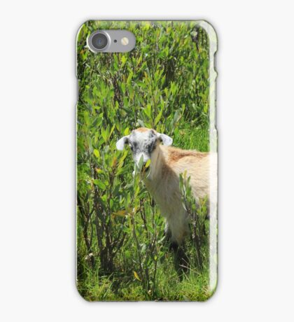 Kid Goat in Brush iPhone Case/Skin