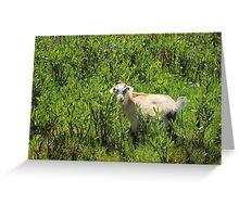 Kid Goat in Brush Greeting Card