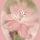 Flower in Pastel - 003 by Qnita