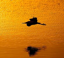 Gliding By by JoeGeraci