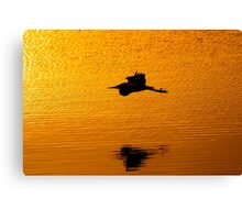Gliding By Canvas Print