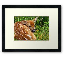 Spring Fawn Framed Print