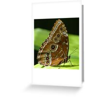 Beautiful Butterfly Wings of Meadow Brown Greeting Card