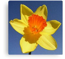 Yellow and Orange Colored Daffodil Close Up Canvas Print