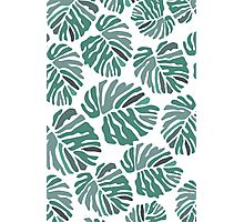 PHILODENDRON Photographic Print